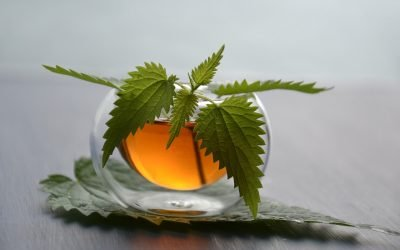 What Do Herbalists Do With Stinging Nettles?