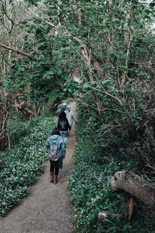 Wild-Medicine-Walk